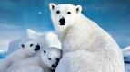 IMAX приглашает зрителей в захватывающее путешествие по Арктике