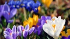 Праздник весны в Киномаксе!